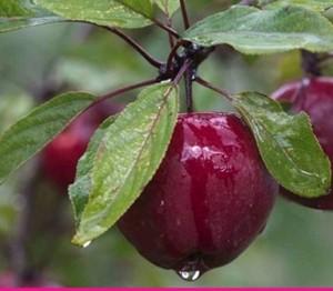 fruitier-bec-Hellouin